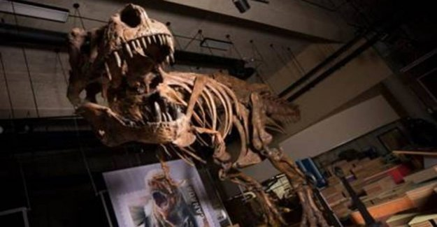 Wow! The world's largest T. rex skeleton assembled in Canada