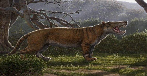 A lion-like animal as large as a polar bear