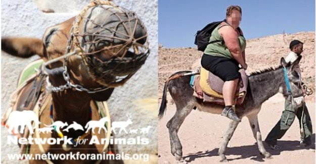 Activists launch campaign against obese tourists on the back of donkeys in Greece