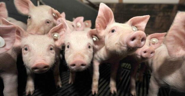 Agricultural policy and cruelty to animals : On the Land and in the barn, the injustice prevails