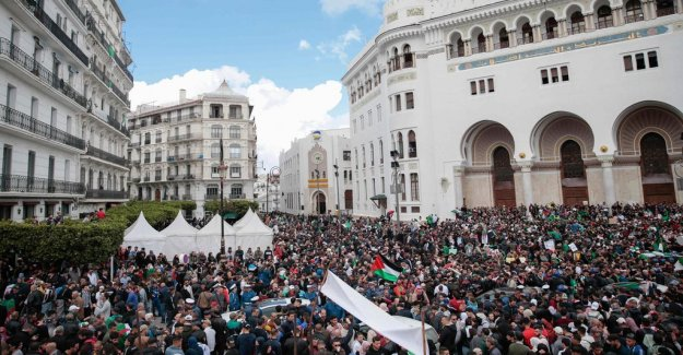 Algerian elections will be held in July
