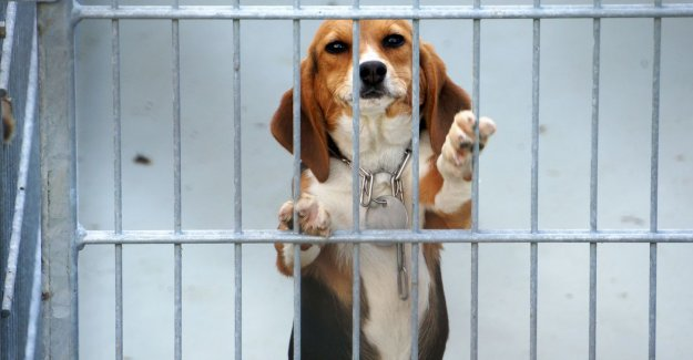 Animal testing in the Netherlands are more deadly, more and more dogs and cats used