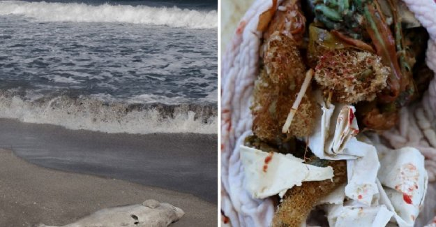 Babydolfijn washed up in the US with plastic bags and balloon in his stomach