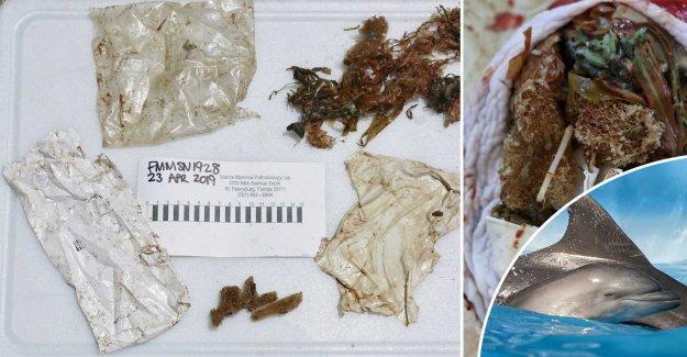 Bebisdelfin found dead with plastic in stomach