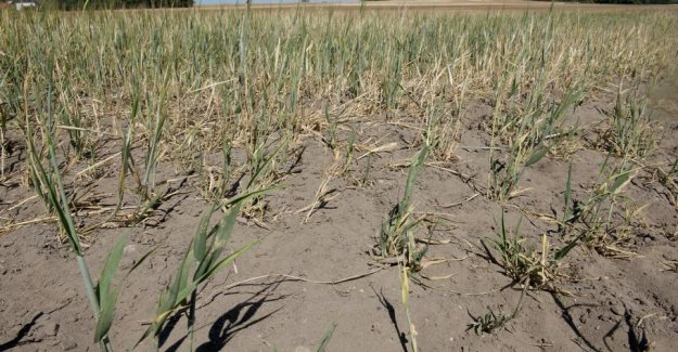 DMI warns: the Risk of drought until the summer