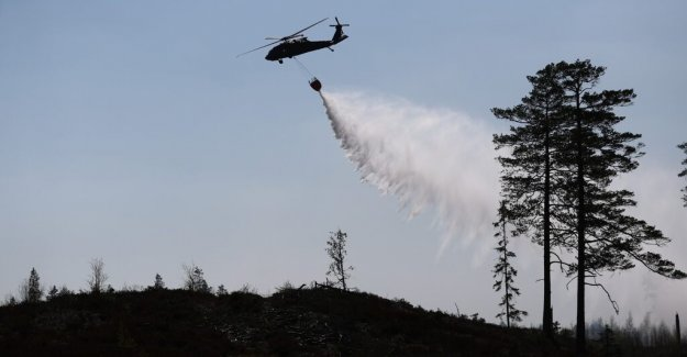 DN Opinion. The forest companies ' pillaging fun leads to fires