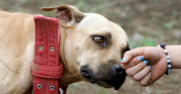 DN Opinion. The responsibility for fighting dogs shall be on the owner