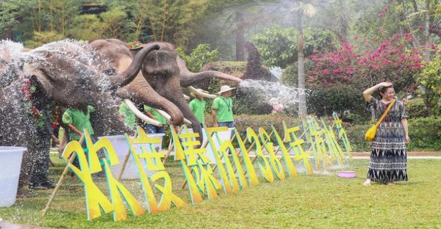 Day of the luckiest series of pictures comes from this - the elephants participated in the festival on their own terms