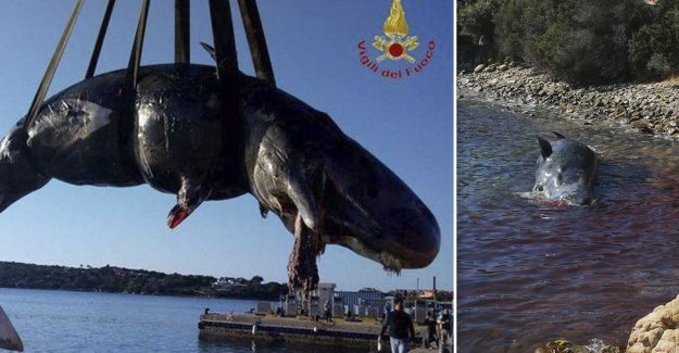 Dead whale had 22 kilos of plastic in the stomach