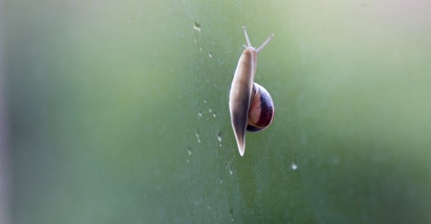 Embrace snails and use human manure: the remarkable tips from a vegan gardener