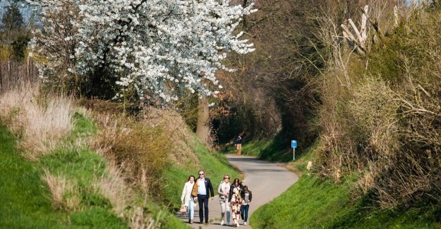 Enjoy the first blossoms: five thousand tourists will find easily the way to Sint-Truiden