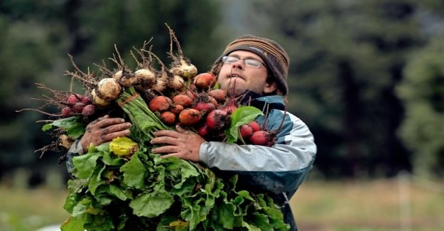 Federal government considering ban on beet-pesticide