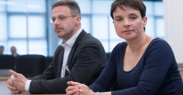 Fine for Ex-AfD-Head of Petry because of negligent Falscheids