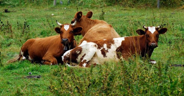 French major deal gave dividend to the scanian farmers