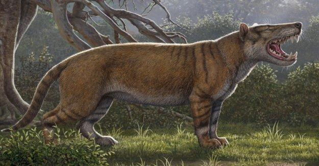 Giant predatory mammals in Kenya discovered
