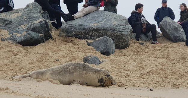 Help, here rests a seal: the police during the easter holidays to 15 calls per day