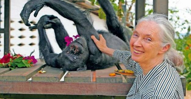 Jane Goodall : living with the monkeys