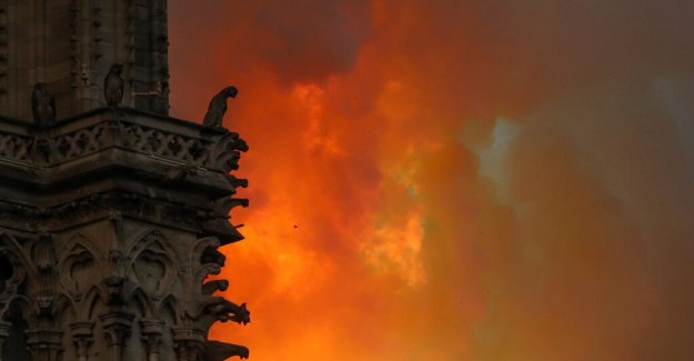 Marie Darrieussecq: Trees gave birth to the Notre-Dame cathedral, the Seine river and rescued her