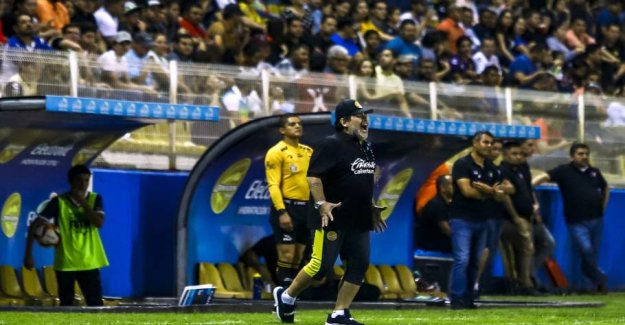 Now gone mad it: Dommerfejl get Maradona to stop
