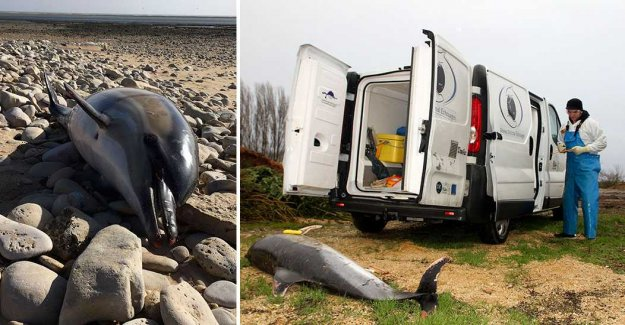 Over a thousand dead dolphins found in France – in just three months