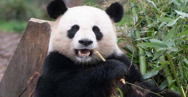 Pandas behavior surprised German zoo