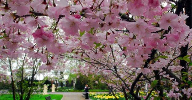 People-Newsletter on Tuesday : mourning, celebration, cherry blossom, stop rods
