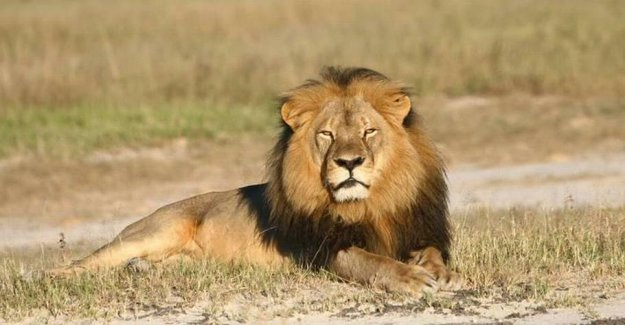 Poacher killed by elephant: he will be eaten by the lions