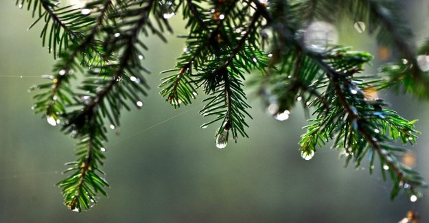 Rain is expected this weekend in the south – the rest of the country remained dry