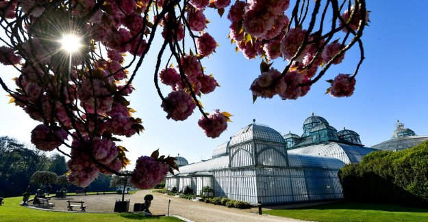 Royal greenhouses of Laeken to go three weeks open to the public