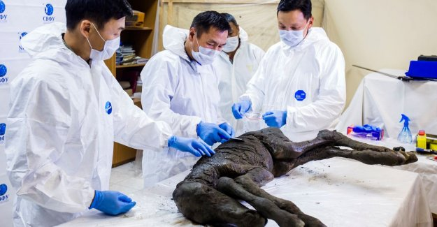 Scientists found liquid blood and urine in 42.000-year-old colt