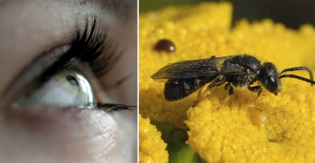 Small bees were found in the woman's eye – lived in tears