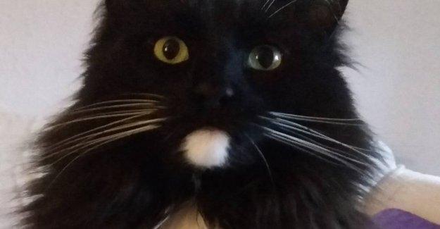 Stinna bought kattebakke on the net: Had never heard of at your own risk