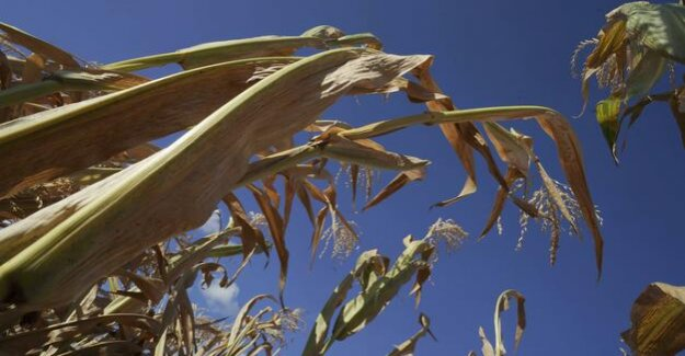The fight against extreme weather : farmers need to have a rethink