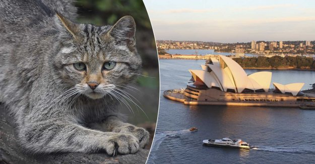 Therefore, Australia killing two million cats – before 2020