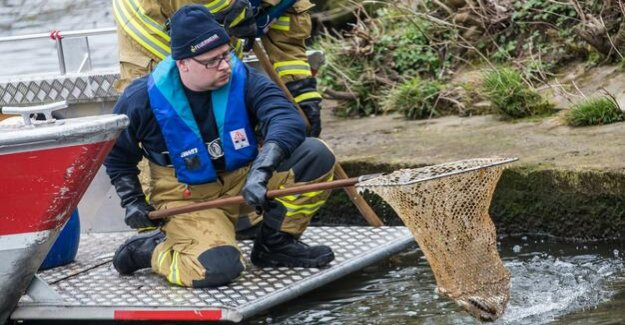 Toxic water : Mass death of fish in a tributary of the Neckar