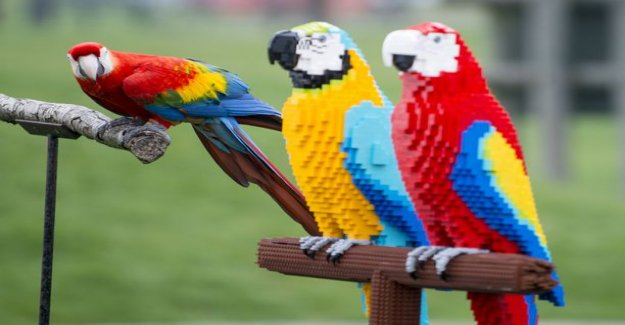 Toy birds confused by the zoo's residents - look at the colorful photos check out of