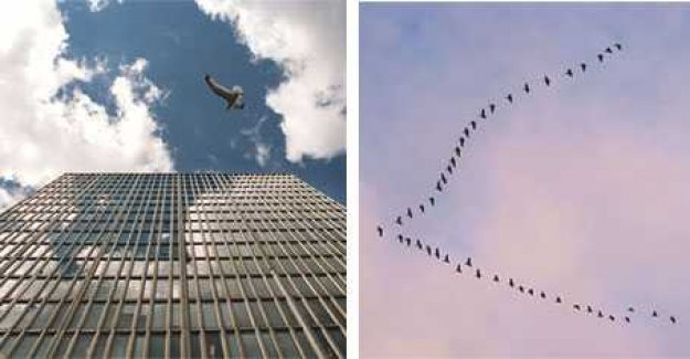 Up to a billion migrating birds crash into skyscrapers