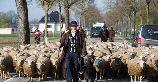 VIDEO. Sheep farmer and his flock occupy busy job for more subsidies: We're going to this all day, until we have certainty