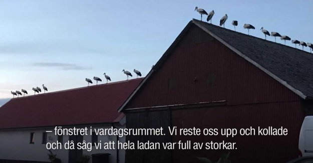 40 storks took the family's roof
