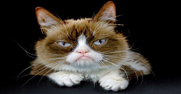 Acid cat Grumpy Cat has died