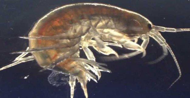 Cocaine and ketamine in the uk shrimp