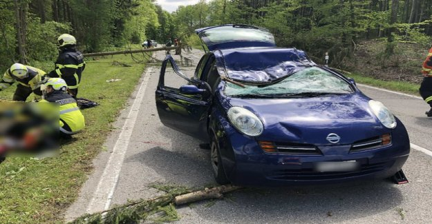 Fallen tree in the Canton of Fribourg, kills passenger