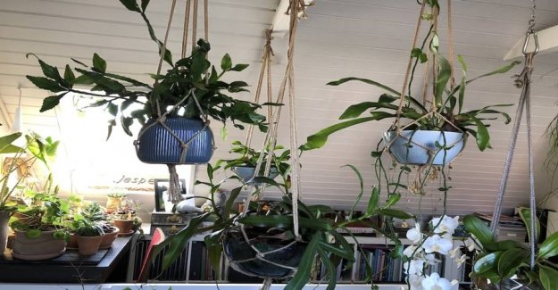 Five plants for your home