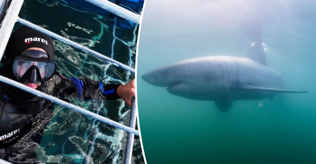 Flemish photographer travels to one of the best places in the world for great white shark spotting, but it is not quite as expected