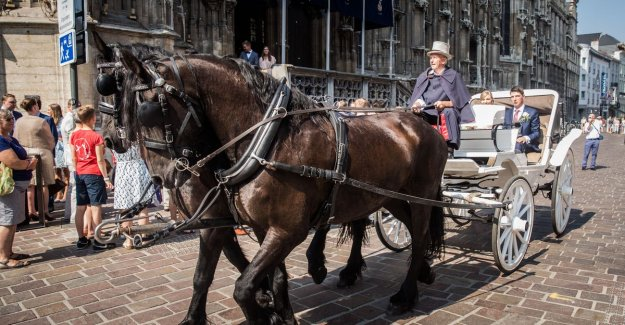 Ghent prohibits tourist horse-drawn carriages: a Decision was taken collegially. Our profession stops, suddenly,