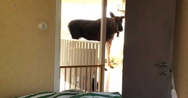 Got a visit from a moose in the living room