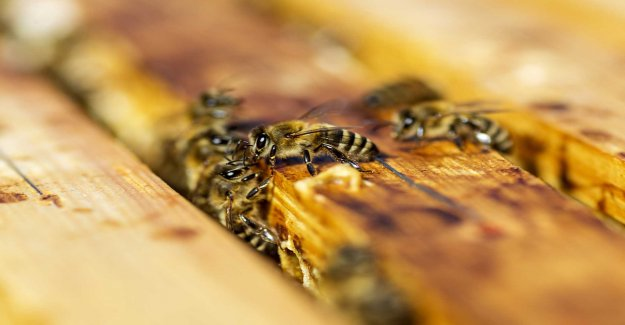 Half a million bees dead after suspected sabotage