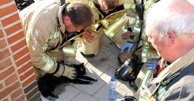 Kitten survives woningbrand thanks to heroes of the fire brigade