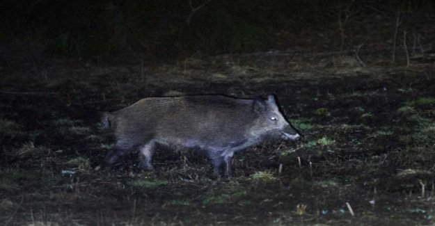 LRF want to allow drones in the boar hunt