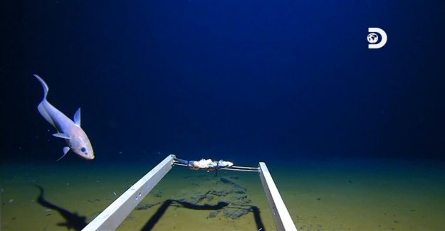 Plastic bag was found on the seabed at rekorddykning in the mariana trench